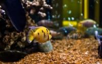 Британка отомстила бывшему и жестоко отравила его аквариумных рыбок