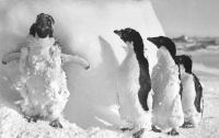 Зоологи обнаружили в Антарктиде сотни мумий пингвинов, умерших 750 лет назад