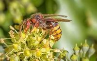 В Днепре рой пчел