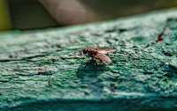 Во Франции мужчина взорвал дом при попытке убить муху