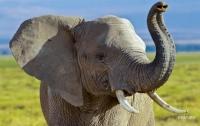 На Шри-Ланке слон напал на автомобиль с туристами (видео)
