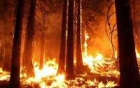 Грузию охватили мощные лесные пожары