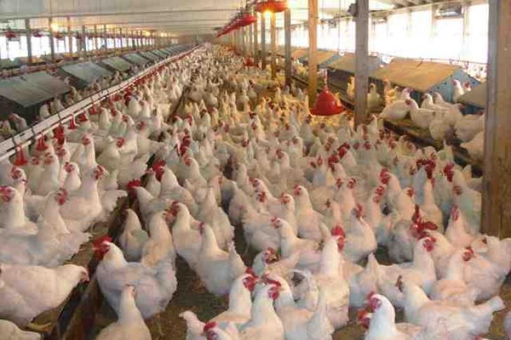 Украина запретила импорт птицы еще изодной страны