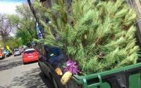 Накануне Пасхи одессит решился выбросить новогоднюю елку