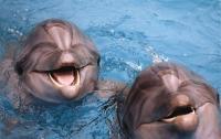 Дельфины «переплюнули» обезьян