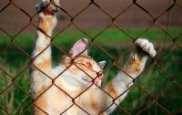 Полиция освободила котенка, которого взял в заложники пьяный мужчина