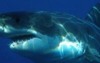 Серфингистов во время соревнований чуть не съела акула