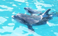 Дельфинам грозит вымирание, заявили ученые