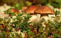 Во Львовской области два грибника попали в реанимацию, а третий - пропал в лесу