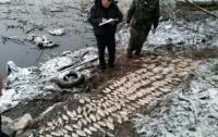 Под Киевом браконьеры подрались с патрулем