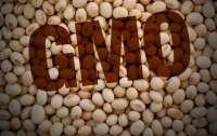 Украинцев хотят травить ГМО! В страну ввезут 50 тысяч тонн генно-модифицированной сои
