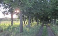Под Харьковом в лесополосе нашли тело мужчины