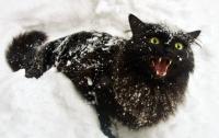 Бураны и арктические морозы: синоптики прогнозируют лютую зиму в Украине