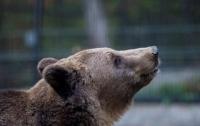 Под Харьковом медведь напал на женщину