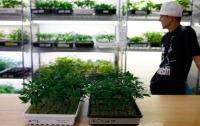 В Калифорнии официально начали продавать марихуану