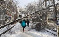 Упавшее дерево убило пенсионерку