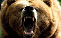Охотники шесть дней отстреливались от белых медведей у тела убитого товарища