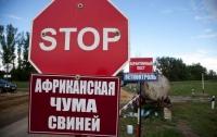 Убивают и сжигают: в Херсонской области массово уничтожают свиней