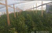 Полицейские нашли огромную плантацию с наркотиками