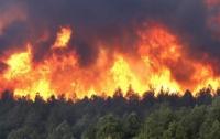 Около тысячи человек эвакуированы из-за пожара в Новой Зеландии