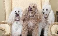 Вчені визначили які собаки найагресивніші