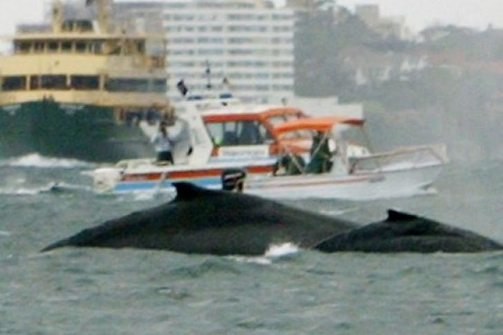 Японский кит | red-book | 486x729