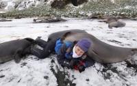 Тюлени приревновали фотографа к пингвинам (видео)