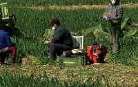 Австрийский фермер закрыл более десятка украинских рабочих на