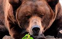 Медведи затащили ребенка в свой вольер и съели