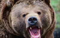 Молодой бегун стал жертвой медведя