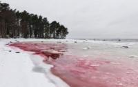 Море в Прибалтике стало красным