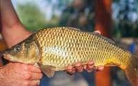 В США рыбу признали