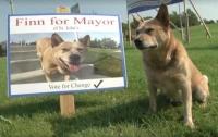 Овчарка баллотируется в мэры канадского города (видео)
