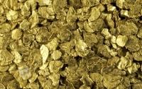 Ученые нашли грибы, которые выделяют золото