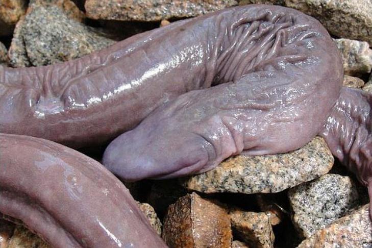 необычные пенисы
