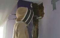 Семья два года прожила с 80 тысячами живых пчел в спальне
