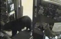 На Аляске медведь зашел в кондитерский магазин (видео)