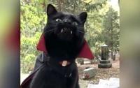 Кот-вампир Монк стал звездой соцсетей