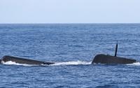 Подводная лодка потопила танкер в Черном море (видео)