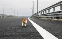 СМИ рассказали об обогнавшем Путина на Крымском мосту коте
