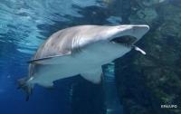 Рыбак поймал акулу на удочку и едва не лишился руки