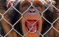 Обезьяна в зоопарке Мариуполя откусила палец младенцу