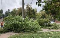 Несчастный случай: во Львовской области ветка дерева убила мужчину