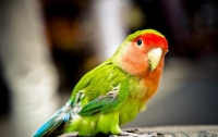 Курьезы дня: стиральная машинка поставила попугая в тупик (видео)