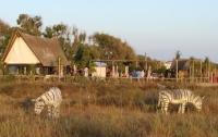 Испанских ослов перекрасили в зебр