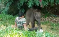 Трогательная встреча слоненка с воспитателем попала на видео