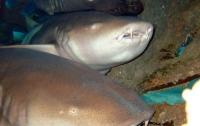 Отец голыми руками вырвал сына из пасти акулы (видео)