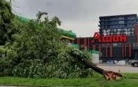 Под Львовом во время урагана дерево убило женщину