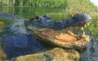 В Индии подростки вырвали друга из пасти крокодила