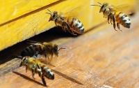 В Австрии садовода посадили в тюрьму за убийство пчел